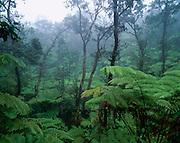 Rainforest, Hawaii Volcanoes National Park, Island of Hawaii, Hawaii, USA<br />
