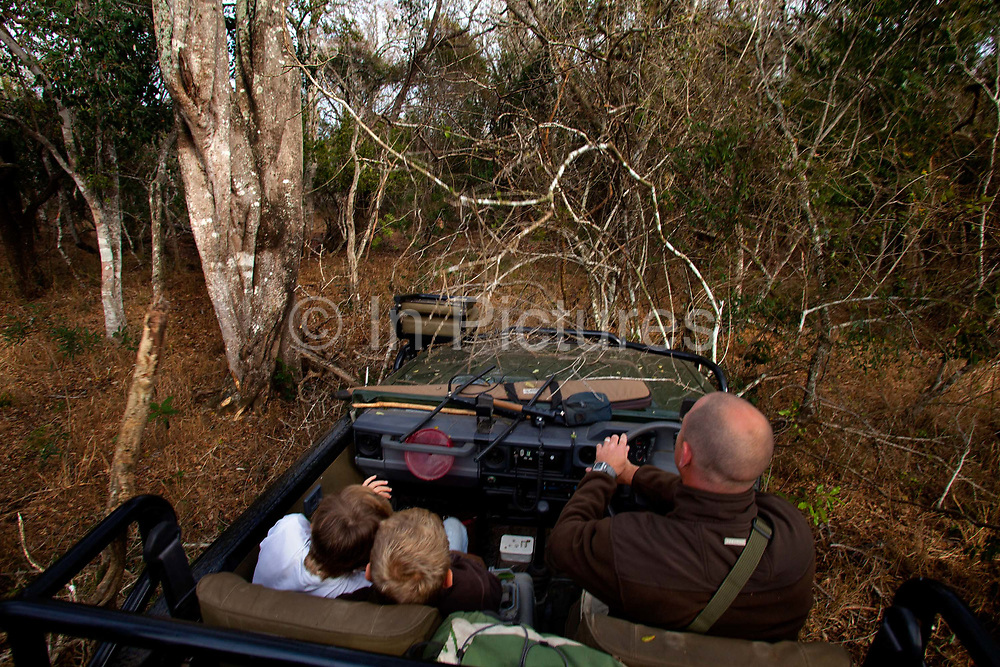 """Offroading through the bush searching for leopard, in a safari land cruiser in the Phinda Game Reserve. <br /> <br /> Phinda Private Game Reserve encompasses an impressive 23 000 hectares (56 800 acres) of prime conservation land wilderness in KwaZulu-Natal, South Africa. Showcasing one of the continent's finest game viewing experiences. Phinda is described as """"Seven Worlds of Wonder"""", with its seven distinct habitats - a magnificent tapestry of woodland, grassland, wetland and forest, interspersed with mountain ranges, river courses, marshes and pans. Phinda is a wilderness sanctuary where intimate encounters, adventure and rare discoveries can be experienced firsthand."""