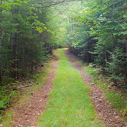 The International Appalachian Trail east of Baxter State Park in Maine's northern forest.