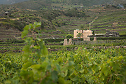 The Donnafugata Winery — surrounded by terraced vineyards — on the island of Pantelleria, Sicily, Italy.