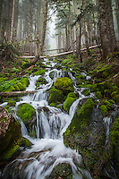 A rocky moss covered streambed running down a mountainside, Mount Rainier National Park, Washington, USA.