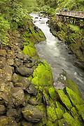 "USA, Alaska,Ketchikan,Tourists enjoy the beautiful scenery of Ketchikan Creek which runs under Ketchikan's ""Creek Street"","
