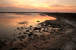 Il complesso produttivo delle saline è situato nel comune italiano di Margherita di Savoia (nome dato dagli abitanti in onore alla regina d'Italia che molto si adoperò nei confronti dei salinieri) nella provincia di Barletta-Andria-Trani in Puglia. Sono le più grandi d'Europa e le seconde nel mondo, in grado di produrre circa la metà del sale marino nazionale (500.000 di tonnellate annue).All'interno dei suoi bacini si sono insediate popolazioni di uccelli migratori e non, divenuti stanziali quali il fenicottero rosa, airone cenerino, garzetta, avocetta, cavaliere d'Italia, chiurlo, chiurlotello, fischione, volpoca..Scorcio di un bacino al tramonto