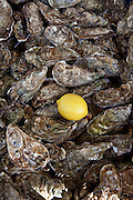Freshly-caught live oysters, fin de claires, on sale at food market at La Reole in Bordeaux region of France