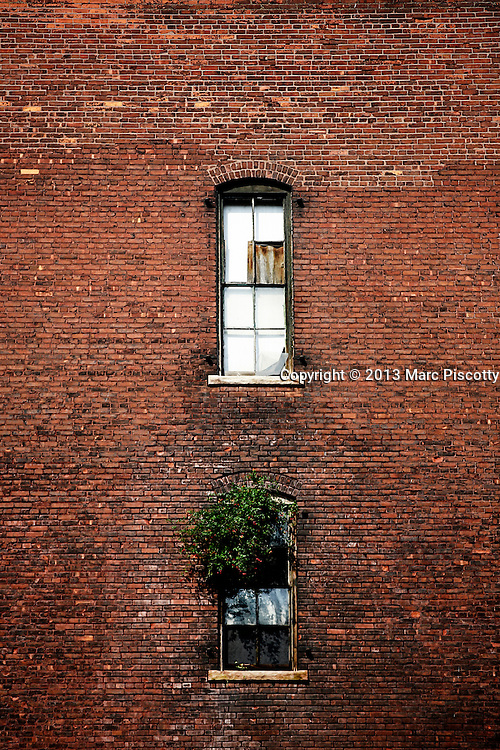 SHOT 9/10/13 8:38:46 AM - A shrub grows out of a window in an abandoned building in downtown Denver, Co. Buffalo, N.Y. is the second most populous city in the state of New York and is located in Western New York on the eastern shores of Lake Erie and at the head of the Niagara River. By 1900, Buffalo was the 8th largest city in the country, and went on to become a major railroad hub, the largest grain-milling center in the country and the home of the largest steel-making operation in the world. The latter part of the 20th Century saw a reversal of fortunes: by the year 1990 the city had fallen back below its 1900 population levels. (Photo by Marc Piscotty / © 2013)