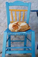 Grèce, Mer Egée, Cyclades, ile de Amorgos, Hora, Chora village, chat // Greece, Cyclades Islands, Greek Islands, Aegean Sea, Amorgos, Hora, Chora city, cat