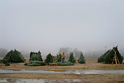 An image from the series Season's Greetings, documenting Christmas in my native North Carolina.<br /> <br /> A Christmas Tree lot on Old 86 in Chapel Hill, North Carolina.