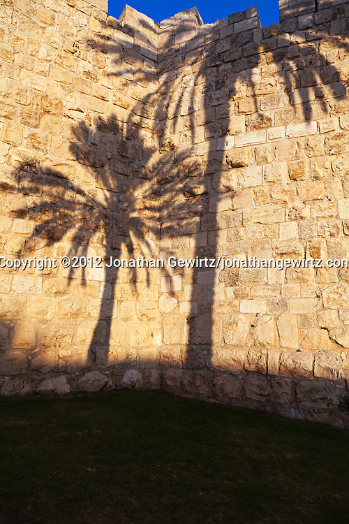 Palm trees cast shadows on a section of the stone exterior wall of the Old City of Jerusalem.