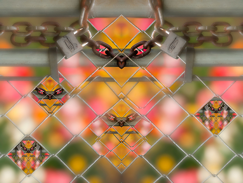 """""""Chastity Belt"""", derivative image created from a photo of a chain link fence with padlock, April, overcast light, Pioneer Park garden, Clallam County, Olympic Peninsula, Sequim, Washington, USA"""