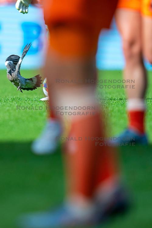 01-06-2019 NED: Netherlands - Australia, Eindhoven<br /> <br /> Friendly match in Philips stadion Eindhoven. Netherlands win 3-0 / pigeon is hit