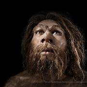 Homo neanderthalensis. Museo de la Evolución Humana (MEH). Burgos. Spain.