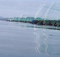 fish farms seen from kayak - fiskemærer sett fra kajakk, Bergen