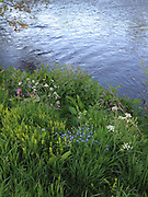 Images taken by Kevin Greenfield during an evening walk by the River Tweed in the Scottish Border, near Selkirk.