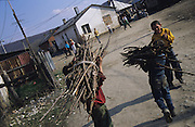 Roma collecting wood to warm their homes. Senica, Slovakia.