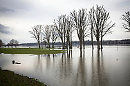 flood of the river Rhine on February 5th. 2021, the flooded meadow in the district Poll, trees in water, Cologne, Germany.<br /> <br /> Hochwasser des Rhein am 5. Februar 2021, die ueberfluteten Rheinwiesen in Poll, Baeume stehen im Wasser, Koeln, Deutschland.