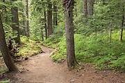 Paradise River Trail.