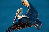 090-P85597<br /> <br /> Malibu Lagoon State Beach<br /> ©2014, California State Parks<br /> Photo by Brian Baer