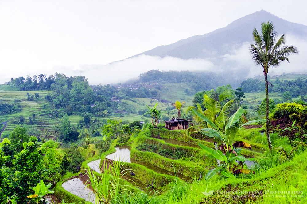 Bali, Tabanan, Jatiluwih. At 700m altitude, with beatiful terraced paddy fields. In the afternoon the sun finally appears on a rainy day, giving some more light to a very beautiful landscape.