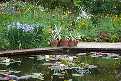 Waterlilies in the Lily Pool at Hidcote Manor Garden. Agave in terracotta pots
