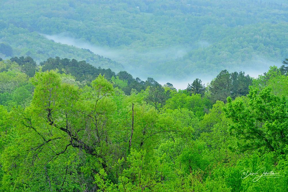 Morning fog in the Buffalo River Valley, JASPER, Arkansas, USA