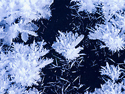Hoarfrost rosettes on icy surface of the Big Wood River, Sawtooth National Recreation Area, Sawtooth National Forest, Idaho.