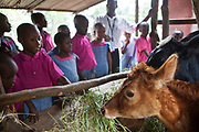 Children learn farming skills  at the Wema Centre farm, Mombassa, Kenya. Wema provide a rehabilitation program for street children; poor, disadvantaged youth; and, orphaned and vulnerable children affected by poverty. Emotional support and education enables the children reintegration back into society.
