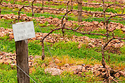 The vineyard with a sign saying that Tannat is planted in 2002 with clone 717 and vines trained in cordon Royat the stones have specifically been put there to improve the growing conditions Bodega Bouza Winery, Canelones, Montevideo, Uruguay, South America