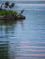 Meredith Bay - full buck moon rising.  ©2016 Karen Bobotas Photographer