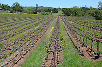 Ironstone Vineyard, Murphys, California, USA, 201304211716<br /> <br /> Copyright Image from Victor Patterson, 54 Dorchester Park, Belfast, UK, BT9 6RJ<br /> <br /> Tel: +44 28 9066 1296<br /> Mob: +44 7802 353836<br /> Voicemail +44 20 8816 7153<br /> Skype: victorpattersonbelfast<br /> Email: victorpatterson@me.com<br /> Email: victorpatterson@ireland.com (back-up)<br /> <br /> IMPORTANT: If you wish to use this image or any other of my images please go to www.victorpatterson.com and click on the Terms & Conditions. Then contact me by email or phone with the reference number(s) of the image(s) concerned.
