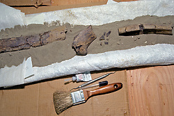 Bone At Lab From Triceratops