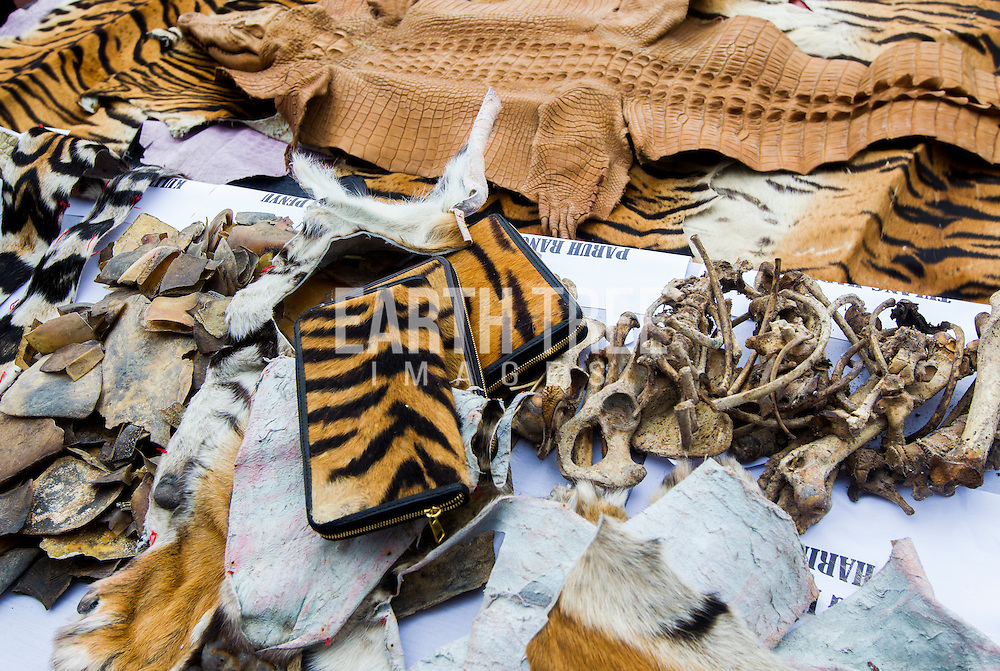Registration of wildlife contraband, including Tiger Skins, at a police station in Banda Aceh, Sumatra, Indonesia before they are destroyed after several busts of wildlife crime syndicates that had been operating in and around the Leuser Ecosystem, the last place on earth where tigers, rhinos, elephants, and orangutans still coexist under the same canopy. The syndicates have trade routes, spanning the globe and as illegal palm oil expansion moves into the last remaining blocks of forest allowing poachers easy access to some of the last iconic species. Photo: Paul Hilton