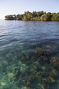 Coral, Man, Mclaren Harbour, Tufi, Cape Nelson, Oro Province, Papua New Guinea