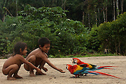 Huaorani Indian children playing with pet scarlet macaws (Ara macao). Gabaro Community. Yasuni National Park.<br /> Amazon rainforest, ECUADOR.  South America<br /> Megatowe took the macaws as chicks from the nest and hand reared them - even feeding them from his mouth.<br /> This Indian tribe were basically uncontacted until 1956 when missionaries from the Summer Institute of Linguistics made contact with them. However there are still some groups from the tribe that remain uncontacted.  They are known as the Tagaeri and Taramanani. Traditionally these Indians were very hostile and killed many people who tried to enter into their territory. Their territory is in the Yasuni National Park which is now also being exploited for oil.