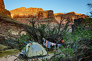Tent & laundry line at Hundred and Twenty Mile Camp at Colorado River Mile 120.3 (also named Michael Jacobs Camp for an old guide who died here). Day 8 of 16 days rafting 226 miles down the Colorado River in Grand Canyon National Park, Arizona, USA.