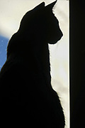 Silhouette of a sitting cat