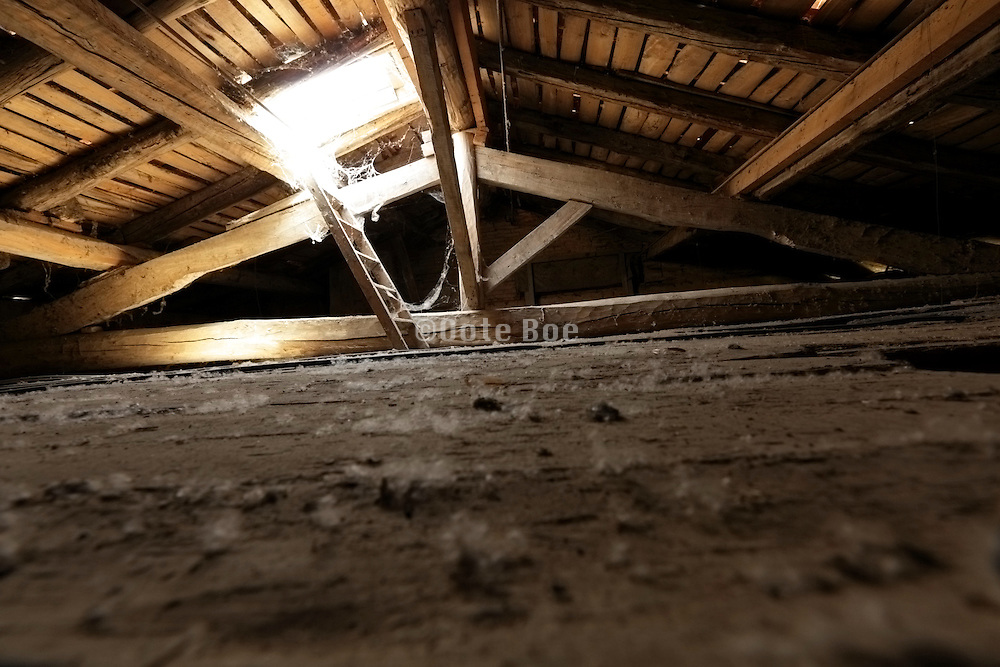 empty raw attic roof space with skylight