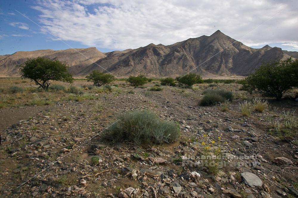 Africa, Namibia - Dry desert landsacpe near Puros