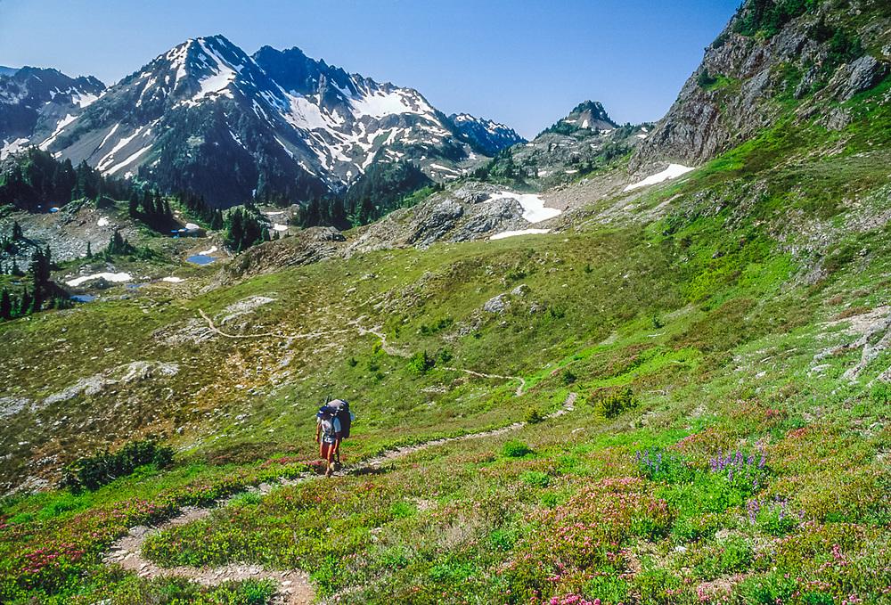 Backpacker, summer, Lake LaCrosse area, Olympic National Park, Washington, USA