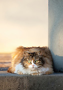 A cat sits on a step in the sunshine in Solomeo, Umbria, Italy