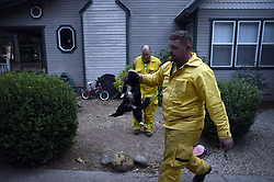 November 18, 2018 - Magalia, California, U.S. -  JUSTIN ARCHER, a volunteer with North Valley Animal Disaster Group,  was able to rescue a cat that was hungry and abandoned in Magalia. Archer, was on one of a dozen or more animal rescue teams checking up on animals who were left at the Camp Fire.  (Credit Image: © Neal Waters/ZUMA Wire)