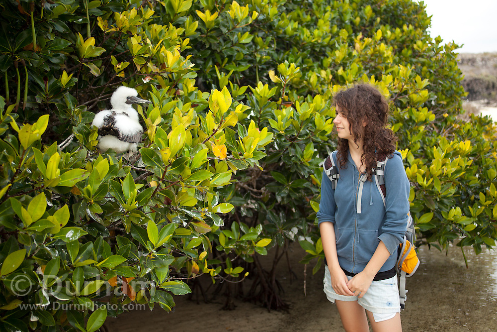 14 year old Isabel Durham observes a red-footed booby (Sula sula) chick in nesting magroves on Genovesa Island, Galapagos Archipelago - Ecuador. (fully released - 82010EXsP)