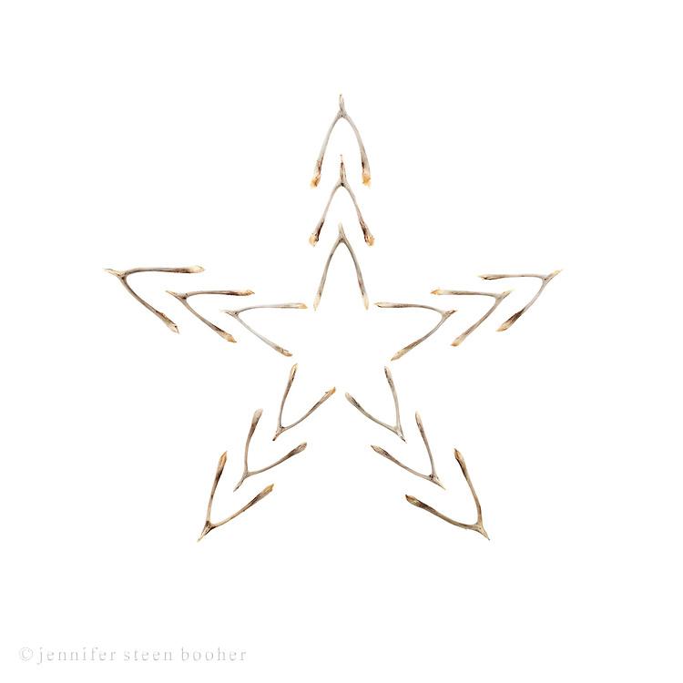Wishbone star