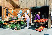 Alaska. Fairbanks. Farmers market.