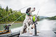 """English setter """"Dean"""" rides in style on BC's Skeena River."""