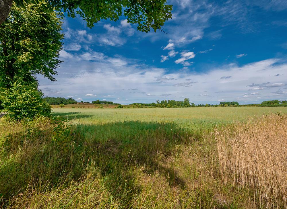 Podlaski krajobraz w okolicach Krynek, Polska