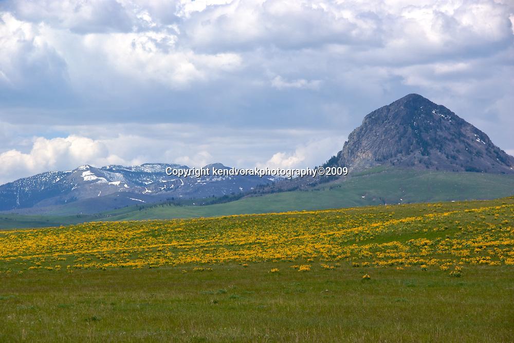 ArrowLeafBalsmRoot on Bean Lake Road, Front Range, Montana