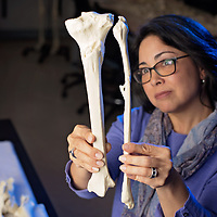 04/25/18 - WOMEN IN SCIENCE:<br /> <br /> Dr. Midori Albert, an anthropology faculty member at UNCW. She studies bones and does forensics, sometimes consulting with police about skeletal remains.<br /> <br /> A. Midori Albert, PhD<br /> Professor, Forensic Osteologist<br /> Forensic Science Coordinator<br /> Institute for the Interdisciplinary Study of Identity Sciences<br /> University of North Carolina Wilmington<br /> <br /> Photo by Michael Cline Spencer