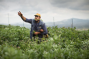 Picking parsley, fava beans and beetroot. At the home and field of Manolis Vardakis, in Pyrgos village. village.