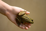 Portrait of a frog resting on a boys hand