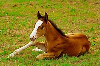 Black Hills Wild Horse Sanctuary near Hot Springs, South Dakota USA